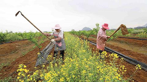 城镇化不是农民户口变城镇户口,更重要的是农民变市民