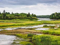 湿地保护法草案二审:破坏湿地每平方米最高可罚款1万元